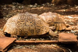 Course tortue